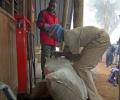 Pesée des sacs des porteurs - Machame Gate 1800 m d'altitude - Ascension du Kilimandjaro - Tanzanie