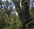 Végétation entre Machame Gate et Machame Camp (1800 - 3000 m d'altitude) - Ascension du Kilimandjaro - Tanzanie