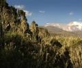 Sortie de brume et 1ère vue du kilimandjaro - Ascension du Kilimandjaro - Tanzanie