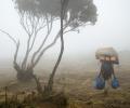 De Machame Camp à Shira Camp ( 3000 - 3840 m d'altitude) - Ascension du Kilimandjaro - Tanzanie