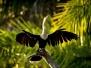 Brésil - Le Pantanal