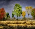 automneb